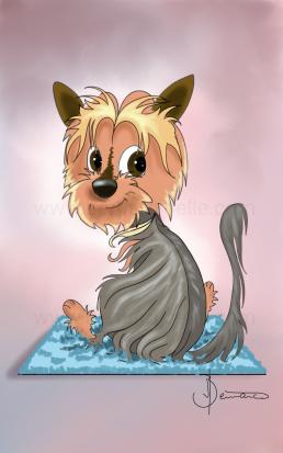 chien yorkshire